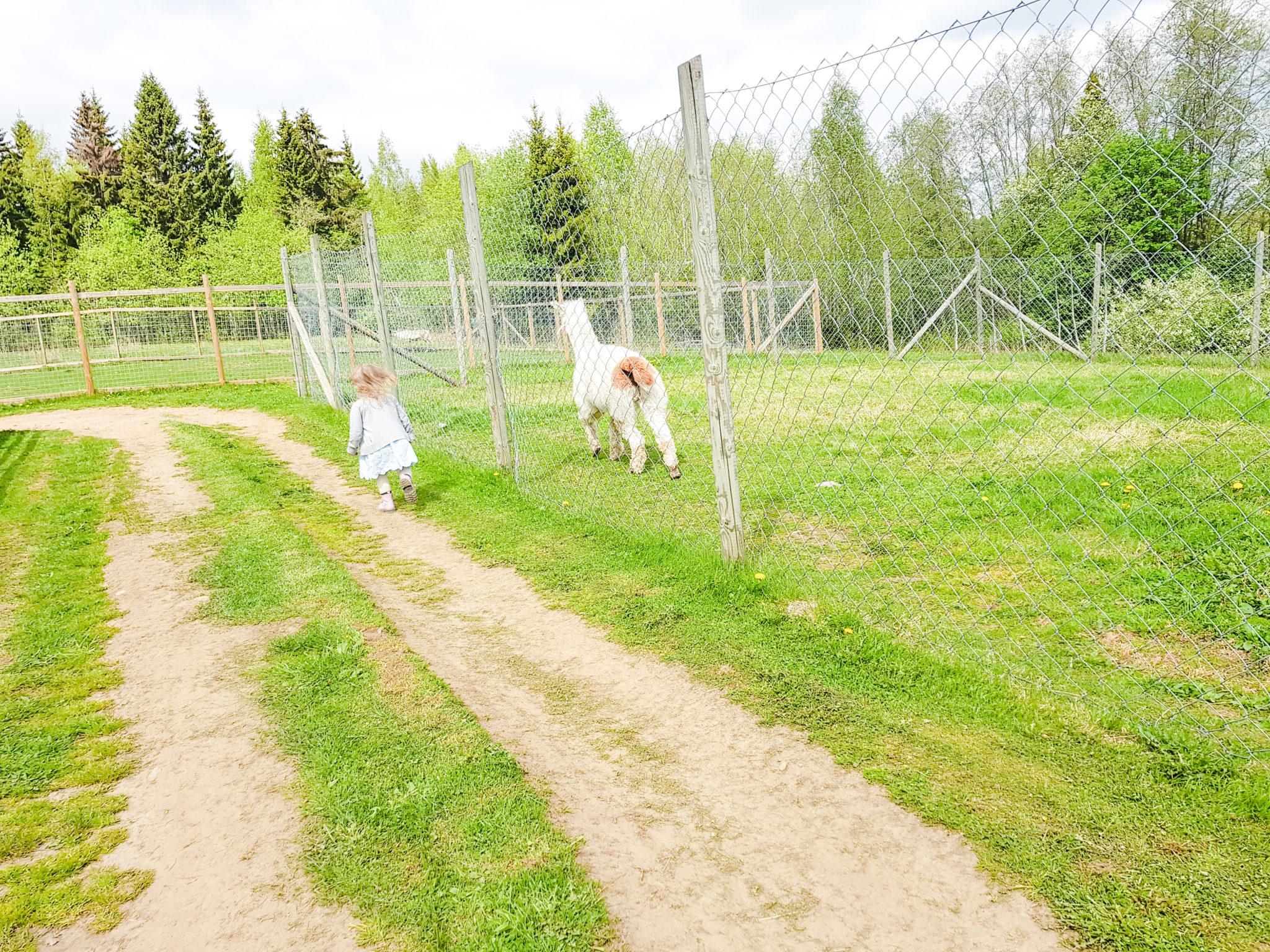 Kuopion eläinpuisto